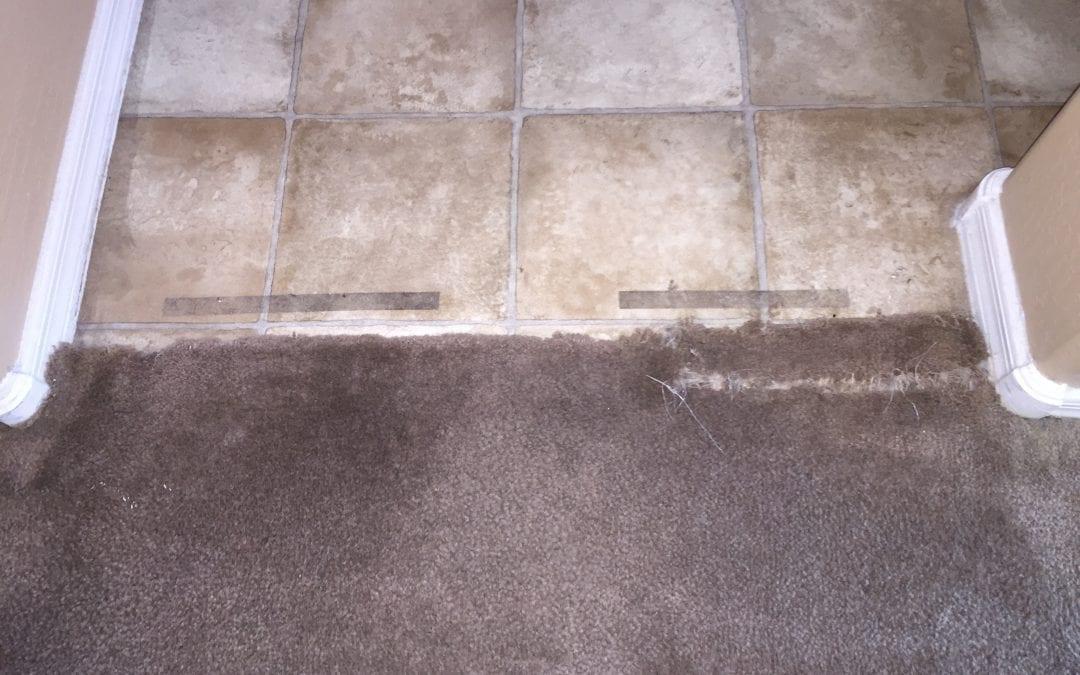 Carpet Repair: Pet Damage in Peoria
