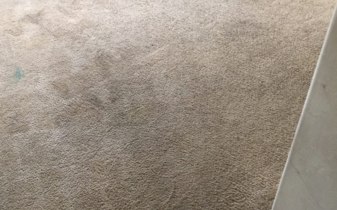 Cleaning Carpets Professionally in Peoria, AZ