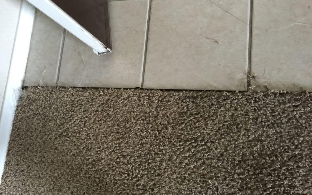 Pet Damage: Carpet Repair in Chandler, AZ
