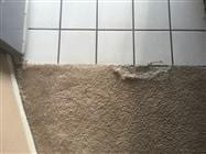 Carpet Repair from Pet Damage in Peoria, AZ