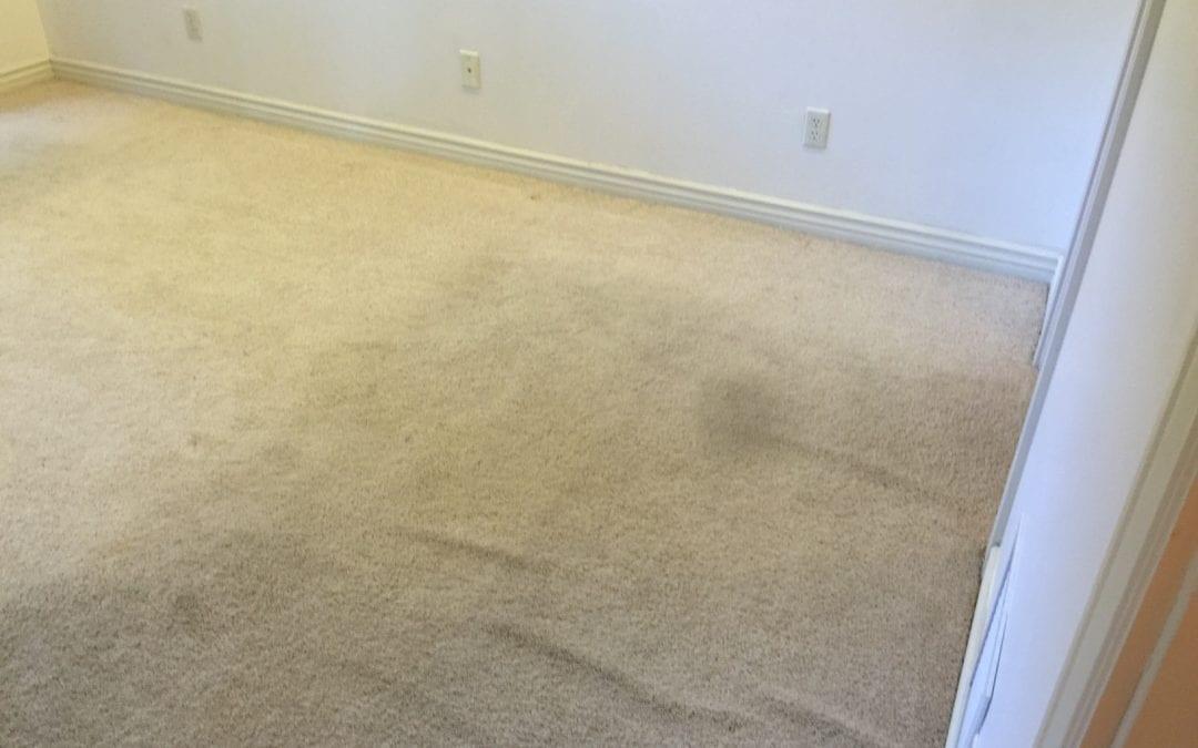 Power Stretching Carpet in Peoria, AZ