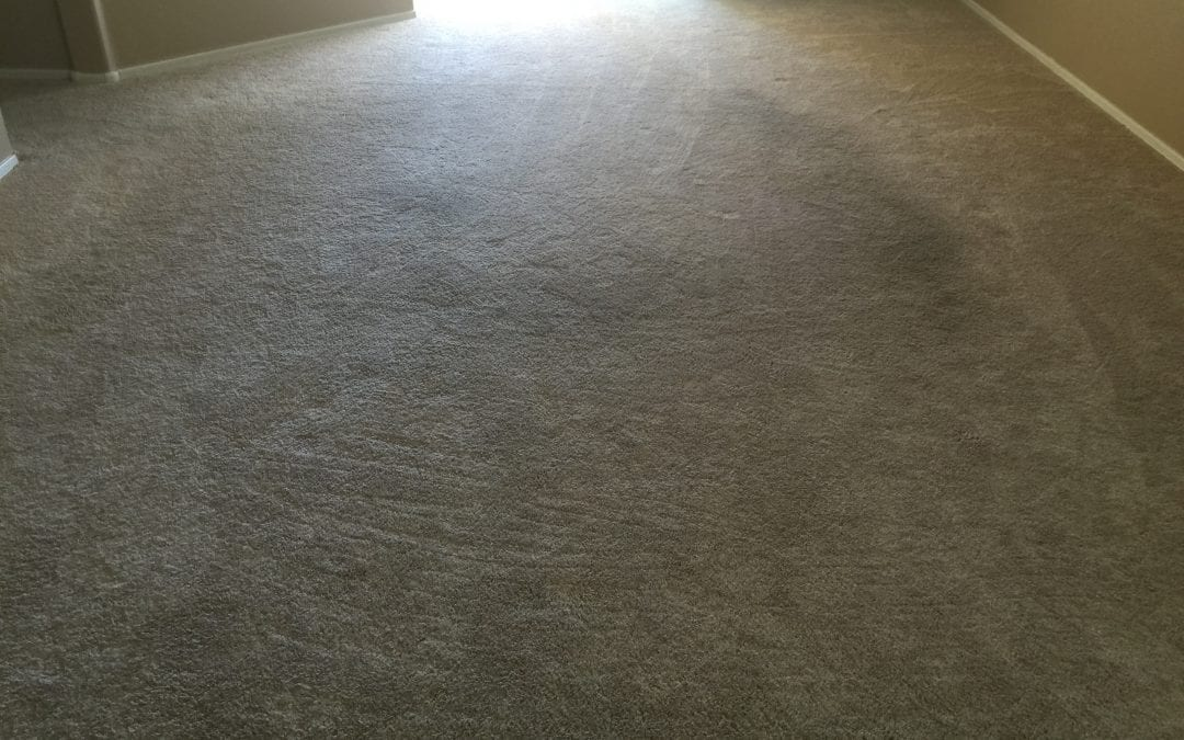 Professionally Cleaning Carpet in Maricopa, AZ