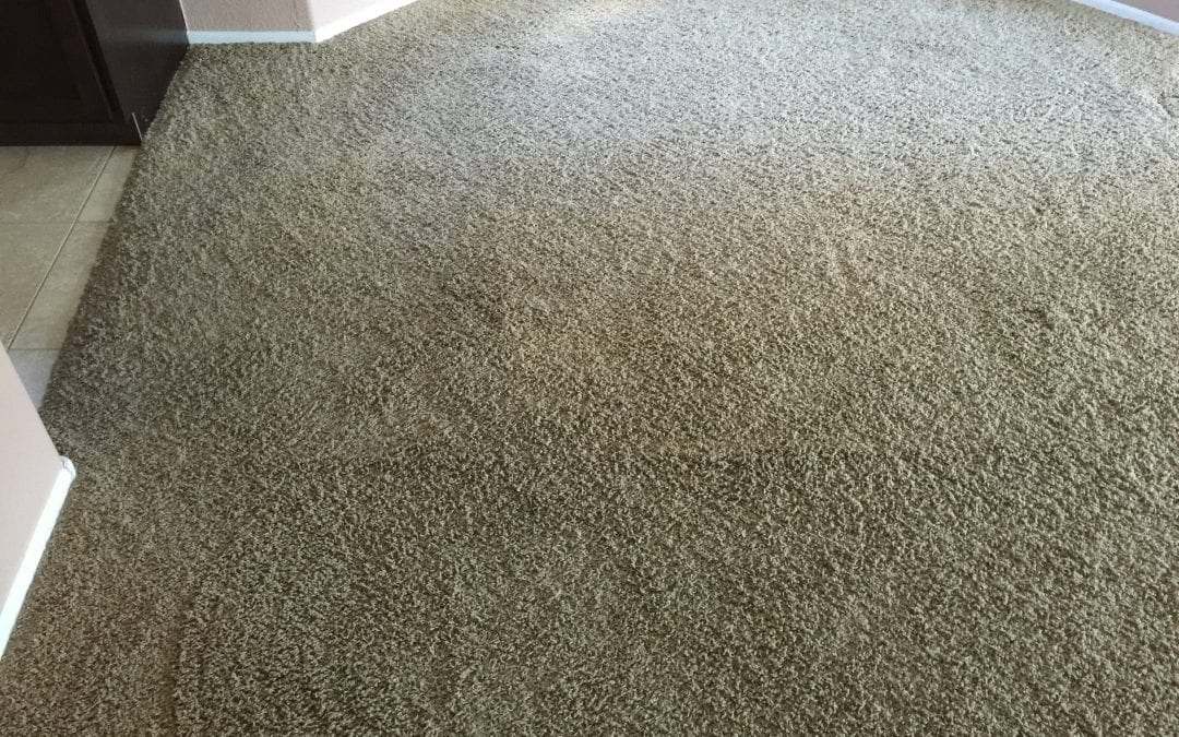 Carpet Cleaning by Experts in Phoenix
