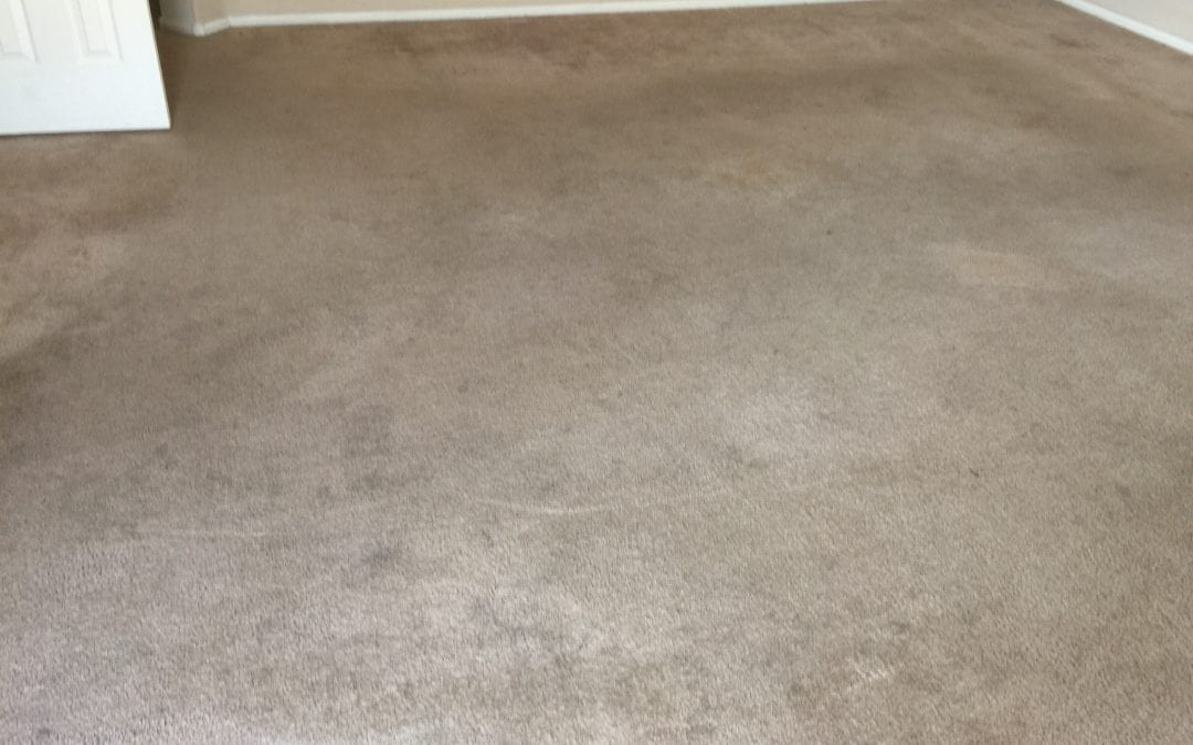 Peoria, AZ: Professional Carpet Cleaning Service