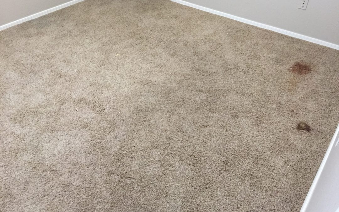 Carpet Cleaning Professionals In Chandler Az Peoria