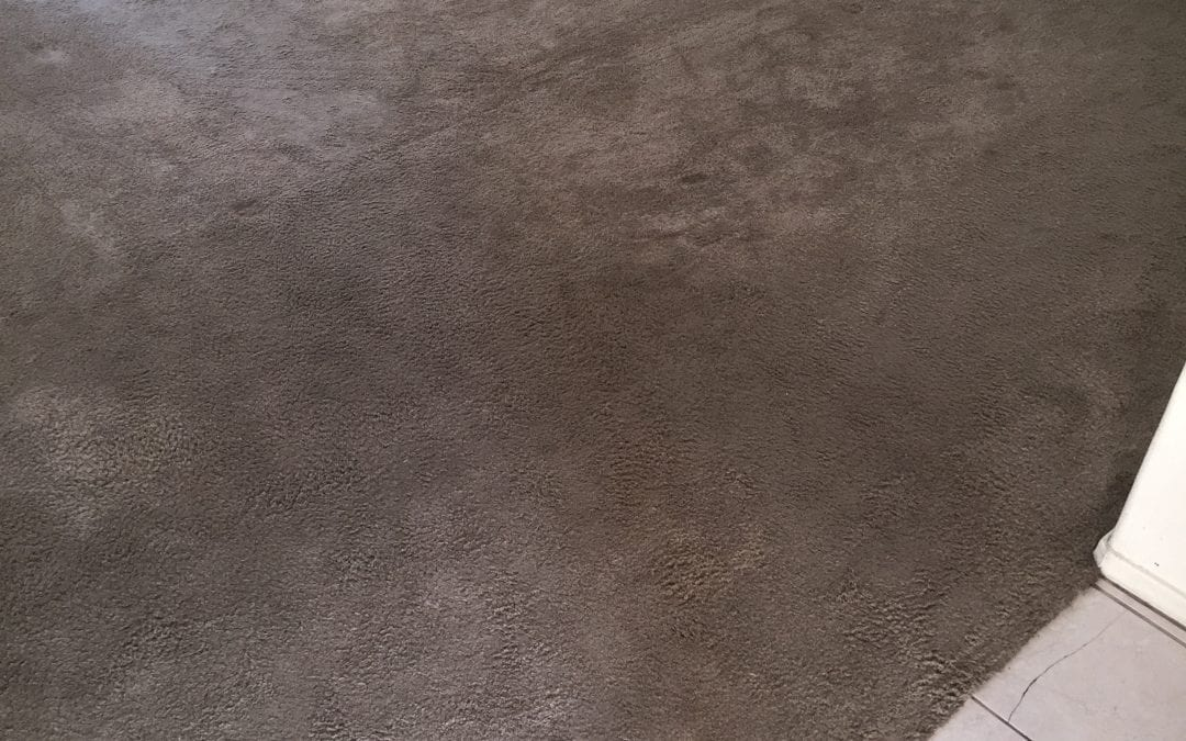 Carpet Cleaning in the Glendale Area