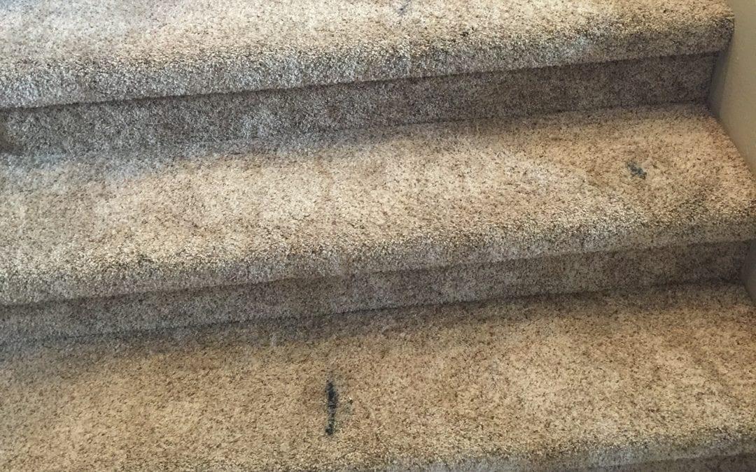 Stairs: Carpet Repair in Chandler, AZ